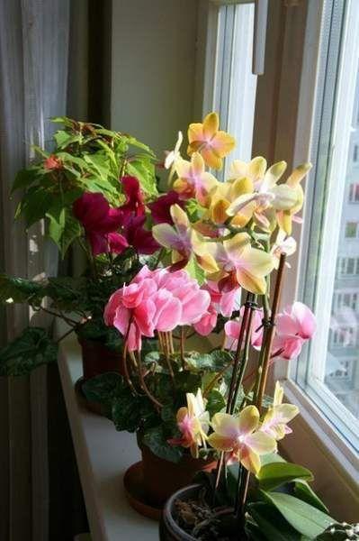 10 Простих порад досвідченого квітникаря