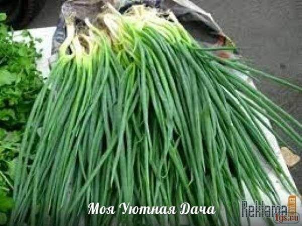 10 Секретів врожайного лука