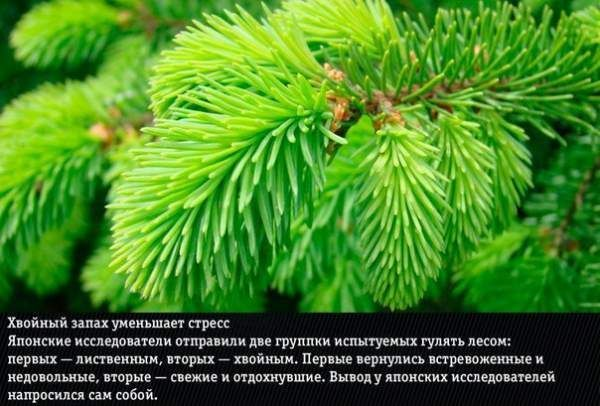 9 Природних ароматів, несподівано змінюють емоції людини