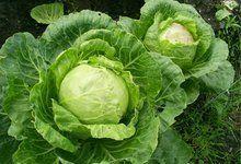 Ефективна капустяна дієта для схуднення, принципи і правила, рецепт капустяної дієти на тиждень