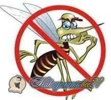 Як зробити пастку для комарів?