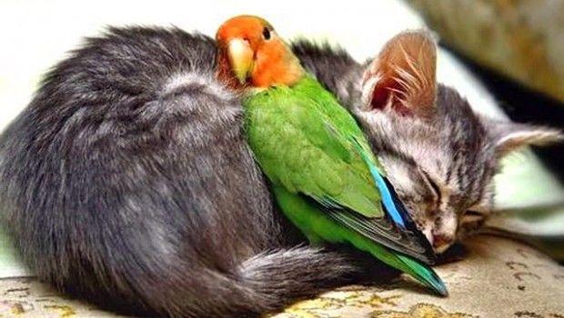 Як зігріти папуги