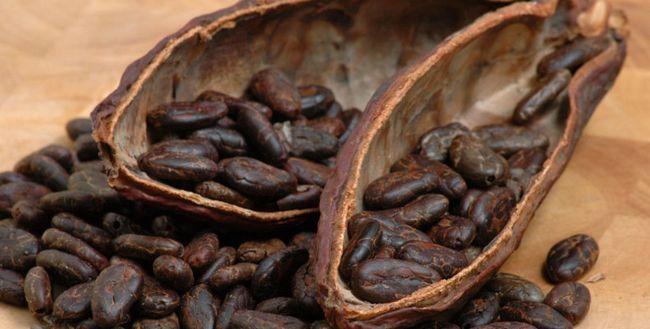 Какао боби: користь і шкода