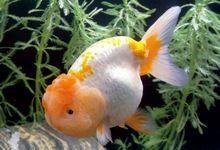 Які корми для рибок вибрати? Як годувати рибок в акваріумі