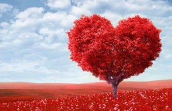 Коли день святого валентина (день закоханих)?