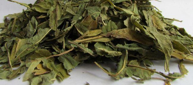 Копорский чай (іван-чай): користь і шкода