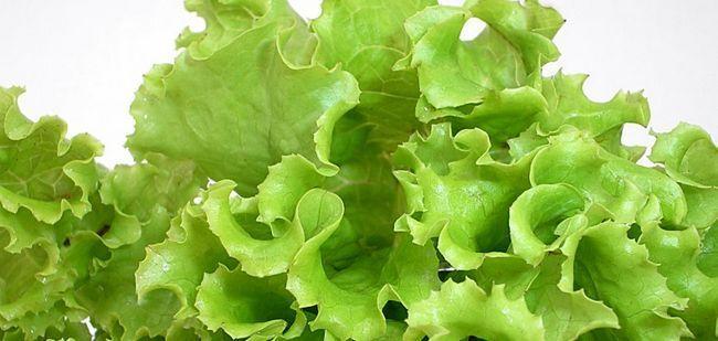 Листя салату: користь і шкода