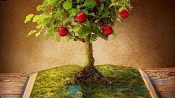 міфи про дерева