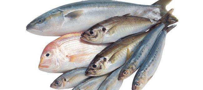Морська риба: користь і шкода
