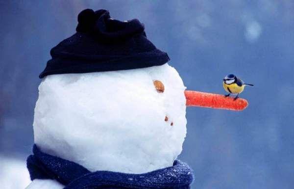 Несподівана історія появи сніговика