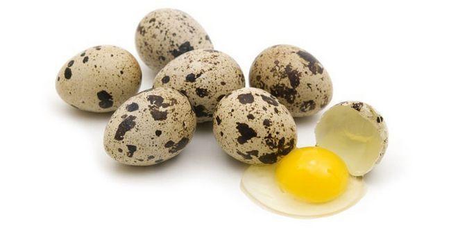 Перепелині яйця: користь і шкода