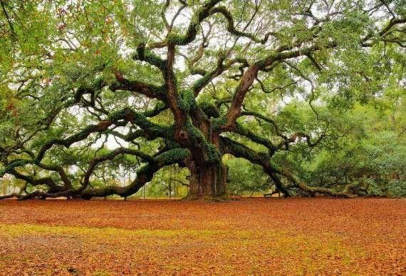 Чому дерева можуть відчувати?