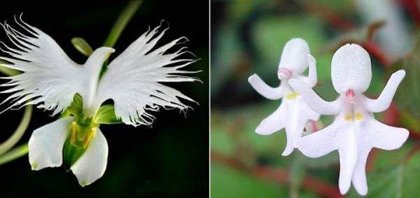 Прекрасні квіти, схожі на що завгодно, тільки не на квіти