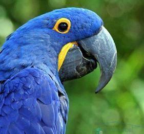 Найцінніша птах з світі. Яка вона і чи існує?