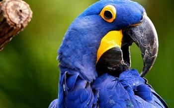 Найталановитіші папуги