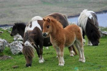 Скільки років живуть коні