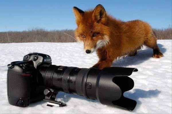 Поради щодо фотографування для новачків.