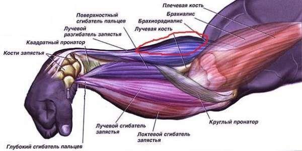 Поради щодо виконання вправ на передпліччя