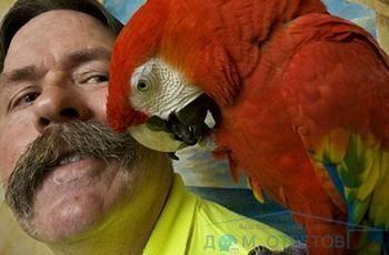 Здатність папуг відтворювати людську мову