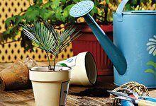 Догляд і розмноження кімнатних рослин насінням. Вплив частоти поливу і вологості повітря