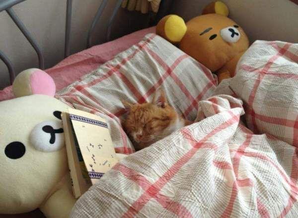 Затишні котики сплять в ліжках як люди.