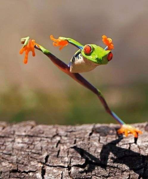 Забавні портрети жаб